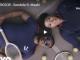 Tresor, Sondela, Msaki, video, download ,mp3, download, datafilehost, toxicwap, fakaza, Afro House, Afro House 2019, Afro House Mix, Afro House Music, Afro Tech, House Music