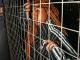 Dee Koala, Ndintswempu, Amilca Mezarati, SimulationRxps, mp3, download, datafilehost, fakaza, Afro House, Afro House 2019, Afro House Mix, Afro House Music, Afro Tech, House Music